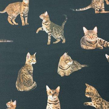 Feline Trend